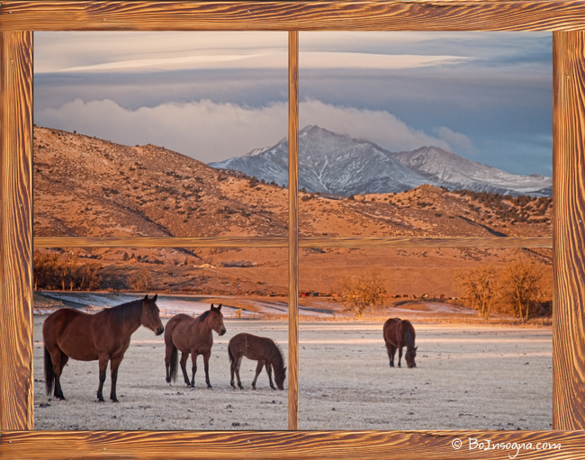 Rocky mountain horses picture window frame photo art view for Window horses